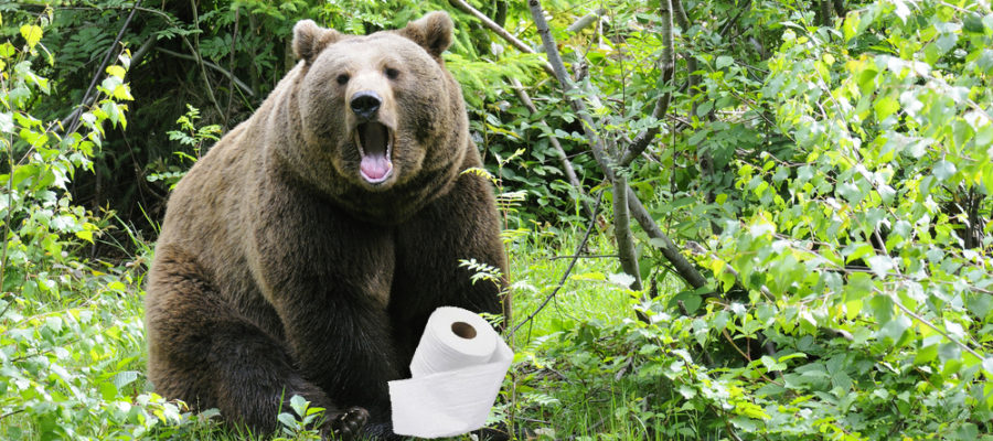 Bear-Shitting-in-Woods-900x400